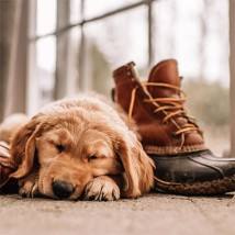 Puppy sleeping next to Bean Boot