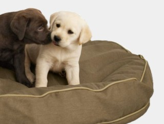 Close-up of 2 puppies on a dog bed