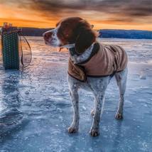 Dog on the ice