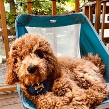 Dog relaxing outside in a chair